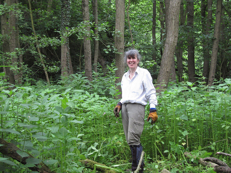 Judy during Himalayan Balsam removal at Harefield Place