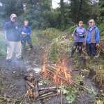 Reed bed restoration, Brixham, Devon