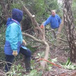Rhododendron removal at Arne RSPB reserve