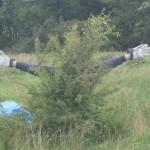 Hawthorn pulling, Pilch Lane, Buckinghamshire