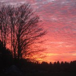 Sunset at the end of the Hedgelaying in Little Marlow
