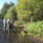 clearing undergrowth to allow regeneration of the native reed beds