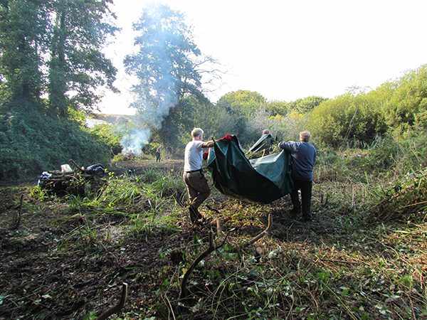 Reed bed clearance at Brixham, Devon